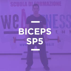 SP_05_biceps