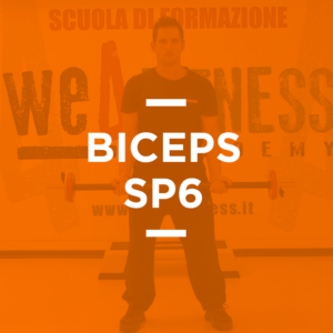 biceps_06
