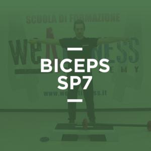 biceps_sp7